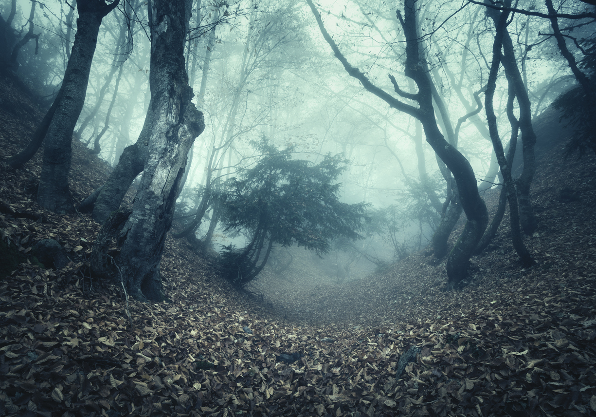 Autumn forest in fog. Beautiful natural landscape. Vintage style