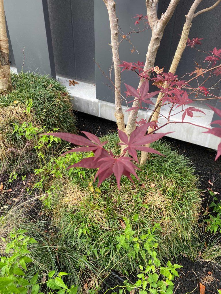 出所:SMATU.net 小さい秋を見つけることもできます.