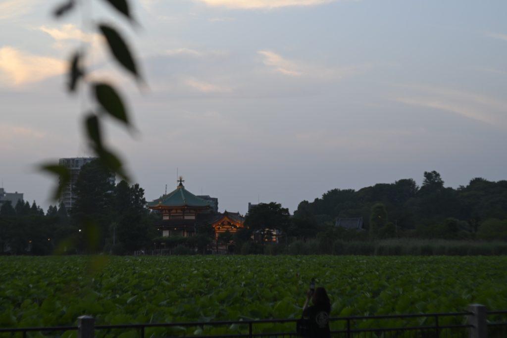 蓮と弁天堂と夕方の晴れた空. 最近,気温が30度くらいまで上がるようになってきたが,夕方は長時間歩いても心地よい.