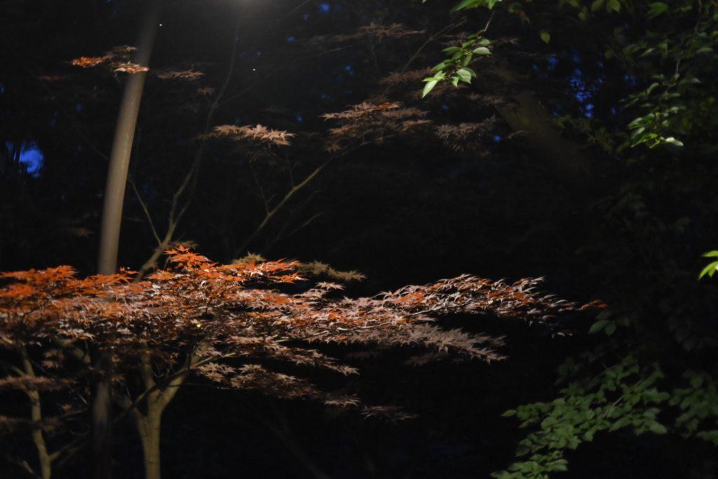 桜の並木の中で紅葉を見つける.桜の季節にもまた来てみたい.