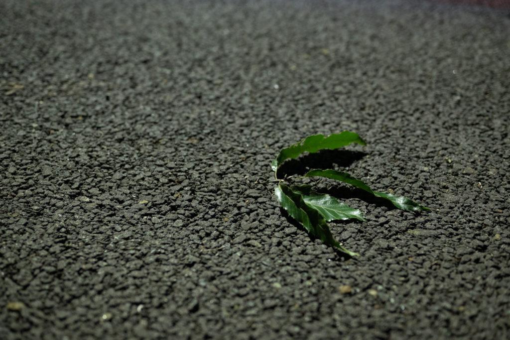 葉っぱの緑とコンクリート.
